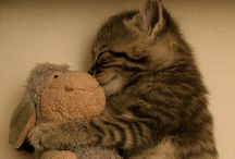 Animals....cute / by Brooke Hately
