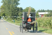 Amish Life / by Wanda Brunstetter