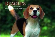 Beagles / by Connie Craig
