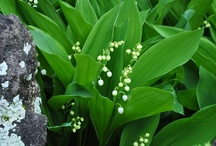 Lily of the Valley / Love Love Love! Thanks for sharing! / by Maly Low