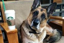 Starbucks, Not Just for People / Some adorable pets who love Starbucks as much as we do / by Starbucks Secret Menu