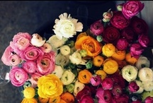 fall flowers / by Robyn Stubenrauch
