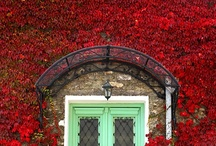 Beautiful Doors / by ISABEL