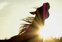 horses / by Jacque Brinson