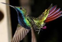 Birds / by JoAnn N******