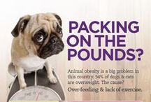Pet Health Tips / by Petnet(io)