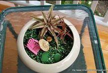 Terrariums / by Penny's Pixie Planters