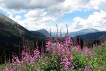 Beautiful Colorado  / by Jamie Stepan
