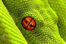 Animals (  Snakes, Lizards ) / by Debra Payne