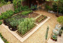 Kitchen garden / by Leisel