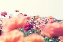 Les Fleurs / by Marrit