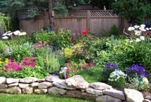 Home: Landscaping / by Andie H