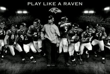 Love Those Ravens / by Sheila Tempchin