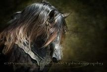 Glorious Horses / by Annie