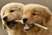 Pooches and Pups / by Annie