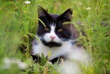 Just Cats & Kittens / by Shari Maddox