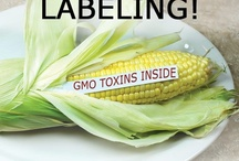GMO NEWS / Category should be science vs. nature. Genetically Modified Organisms-GMO. / by Deborah Guerrero