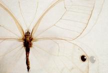 綺麗な虫 Insects / by Junko Momota