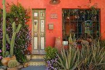 Planties.  Cactus suculentas.. espacios verdes interiores y exteriores / by Ale Fella Miscelaneas Arte Utilitario
