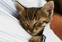 Kitten! / For my baby Rue / by Parrish Williams