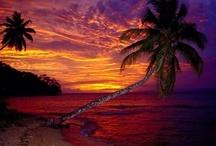 Palm Trees & Beach Stuff / by Marilyn Pfingston