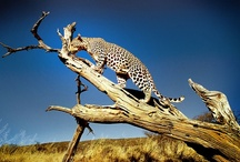 Wildlife / Nothing compares to seeing wildlife in its natural habitat. Something easily accomplished in Namibia. / by Namibia Tourism Board