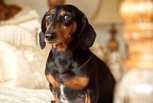 precious pups / cute dogs / by bettie dowty