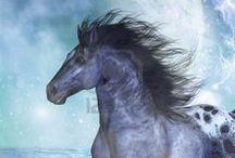 Horses / by Amelia Smith