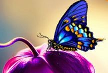 Butterflies, Dragonflies & Humming Birds / by Shannon M
