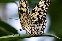 Animals - Butterflies & Insects / by Tine