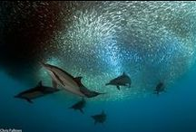 Animals - Life in the ocean / by Tine