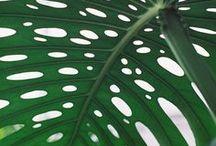 essentials | green / by kate quinn organics