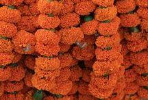 essentials | orange / by kate quinn organics