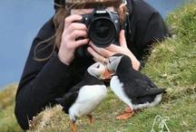 Animals: Birds: Puffins / by Data Joan
