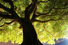 Nature - Trees - 1 / by Margaret Walters