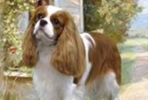 LOVE my Cavalier, Bentley!  This is a great breed! / by Nedra Hardy