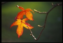 Autumn / Fall  / by Bobbie Sims-Metcalf