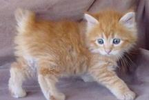 cute kitties & cats / by Barb Knappen
