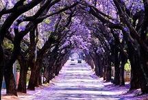 Purple / by Megan