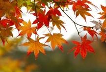 Fall In Love / by TheGreenNursery
