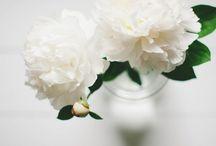 Floral Arrangements / by Sarah O'Connor