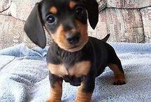 Puppies!!!! / by Savannah Cooper