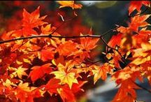 fall my favorite season / by chris brooks