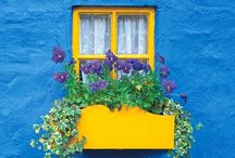 Windows / by Marisa Arce