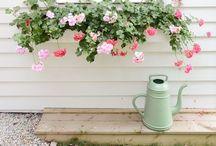 Garden / by Sharine