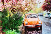 Volkswagen bus/kever / by Sharine