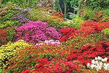 Gardening / by Tina Thompson