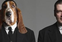 Basset Hounds...Spelled B-A-S-S-E-T Hounds! / by Lisa J Cherry