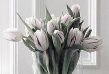   P   FLOWERS . WHITE / by Patricia Gray   Interior Design Vancouver