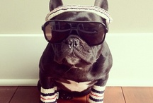 Truly Madly Frenchie  / by Alison Van Pelt